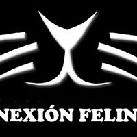 CONEXIÓN FELINA DE MISLATA