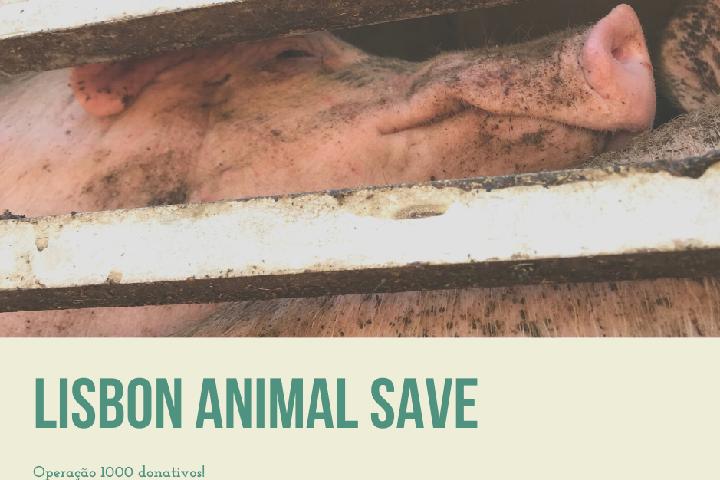 Lisbon Animal Save