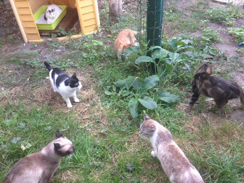 La Vallée des Chats, Association