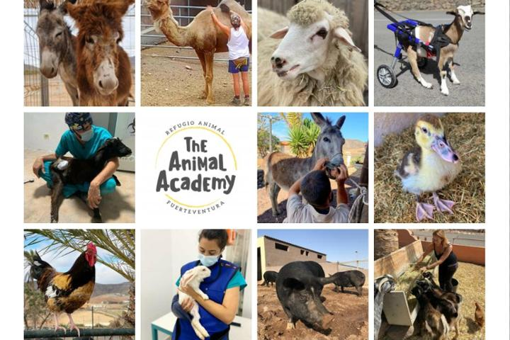 The Animal Academy - Refugio Animal Fuerteventura