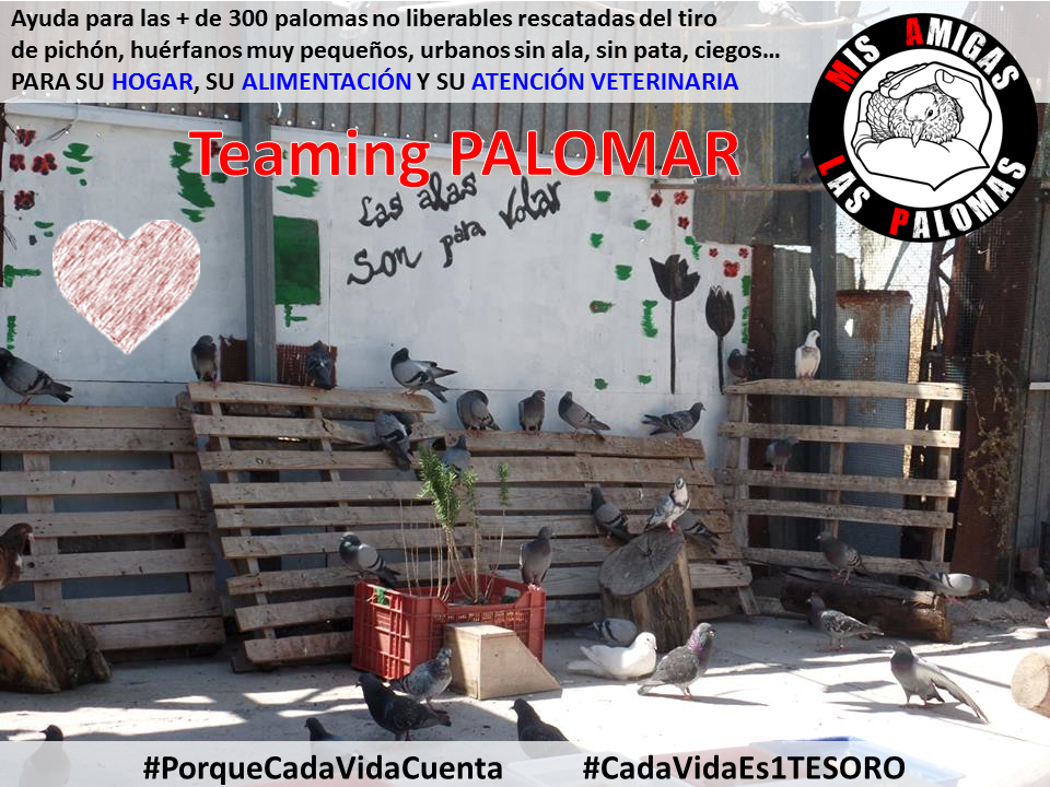 Mis Amigas Las Palomas (MALP)_Palomar