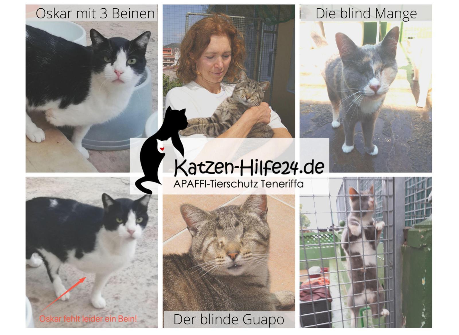 Los gatos ayudan - Katzen-Hilfe24.de