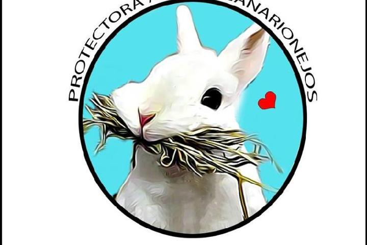 Asociación Protectora de Animales Canarionejos