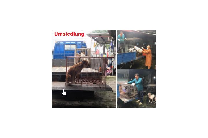 Tierschutzverein Mensch-Tier-Spirits-Helvetia