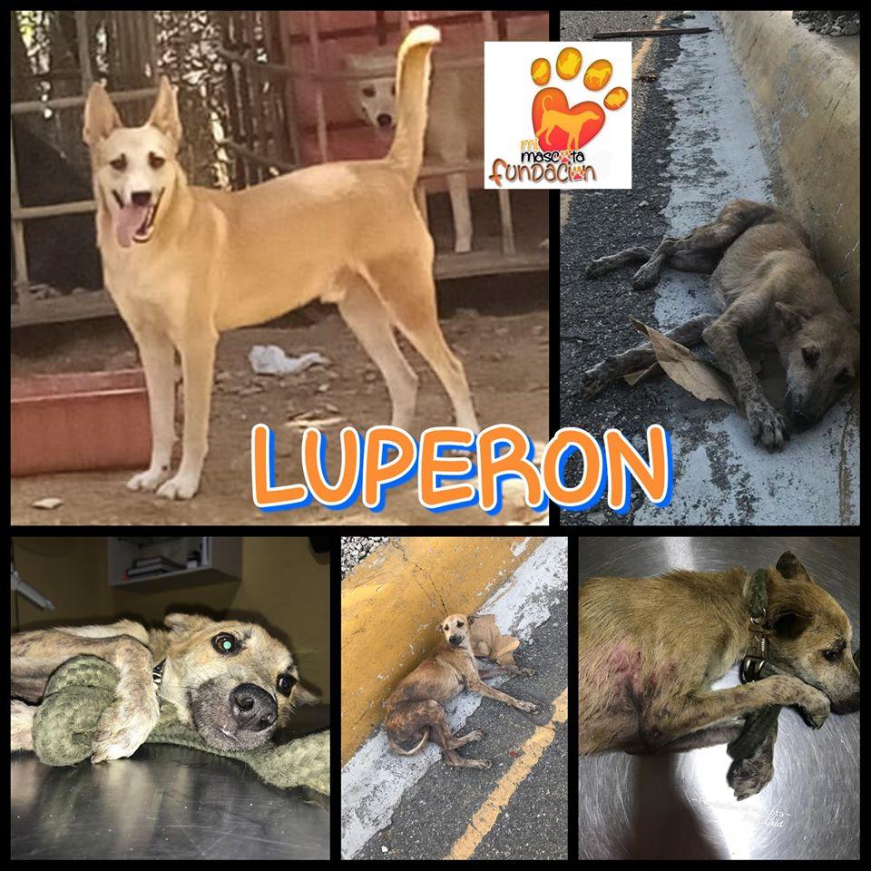 Global chance for animals/Fundacion Mi Mascota animal rescue