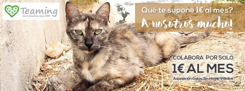 Asociación Gatos Sin Hogar Villalba GSH