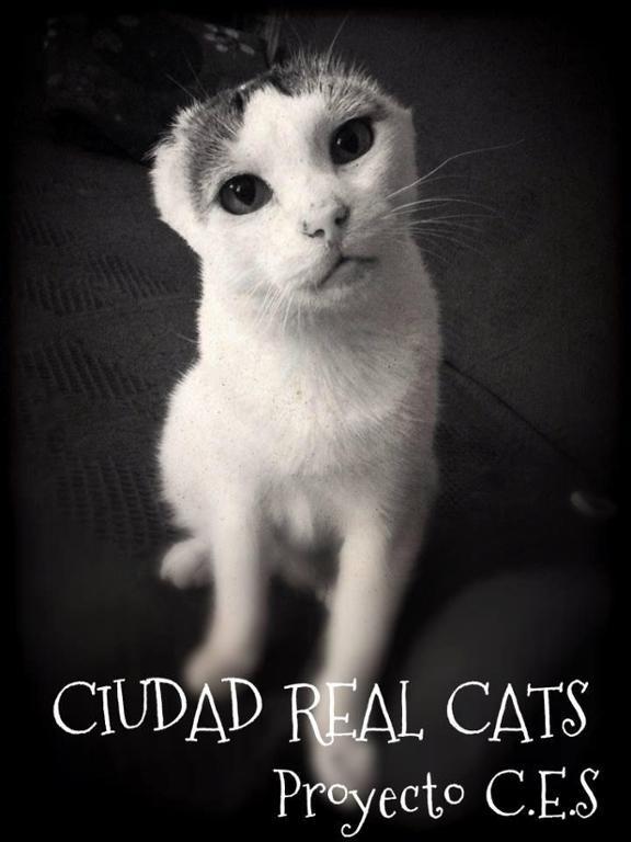 CIUDAD REAL CATS - Proyecto C.E.S