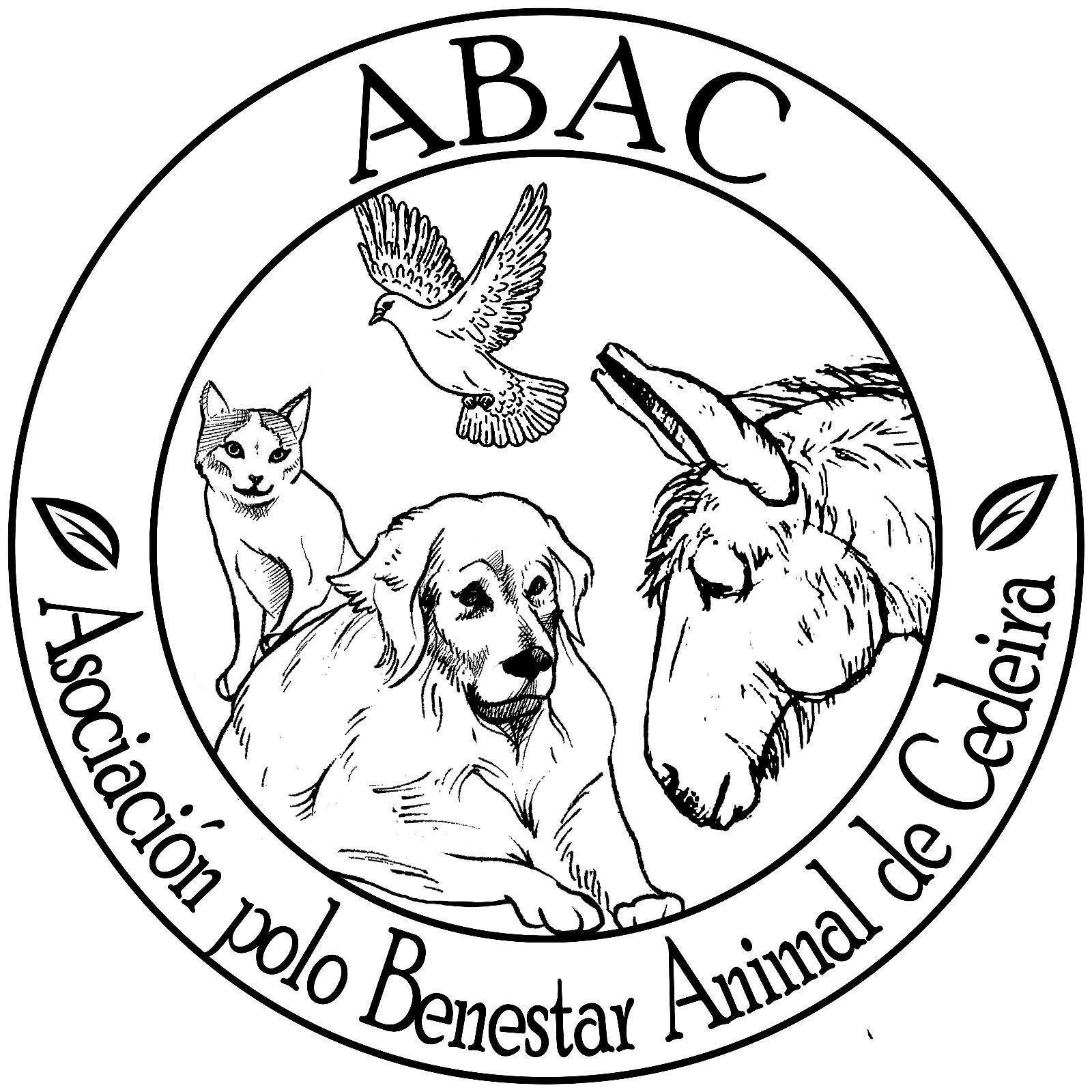 Image of: Horse Abac Association For Animal Welfare Cedeira Rebloggy Abac Association For Animal Welfare Cedeira Teaming Group