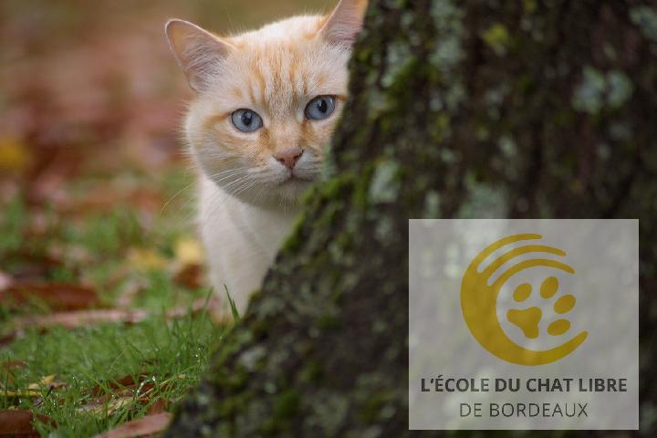 École du Chat Libre de Bordeaux