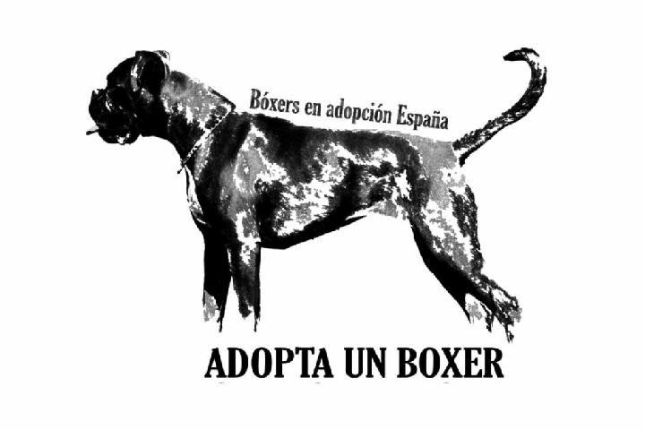 Bóxers en adopción España