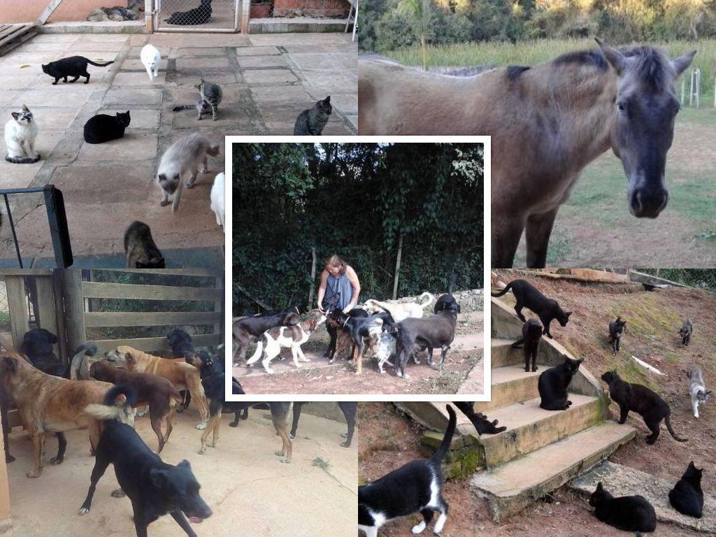 Solanges Tierhilfe e.V.