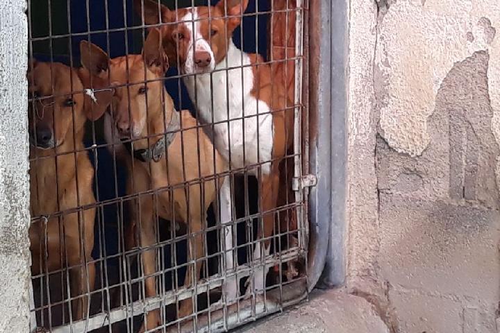 Soutien aux refuges espagnols