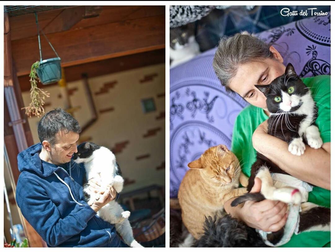 Gatti del Torrino