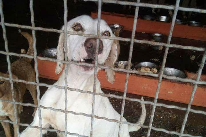 Stray Dogs in Bosnia Need Urgent Help
