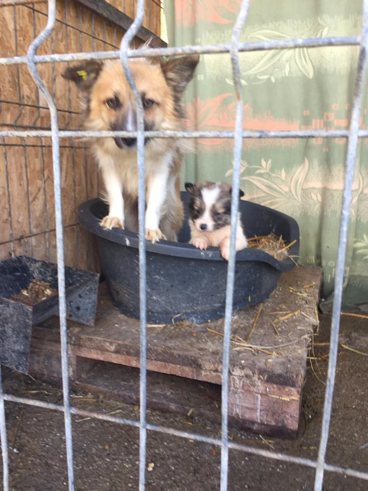 Help for Valcea dogs