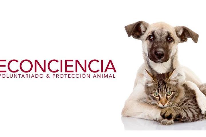 1 € para animales abandonados maltratados