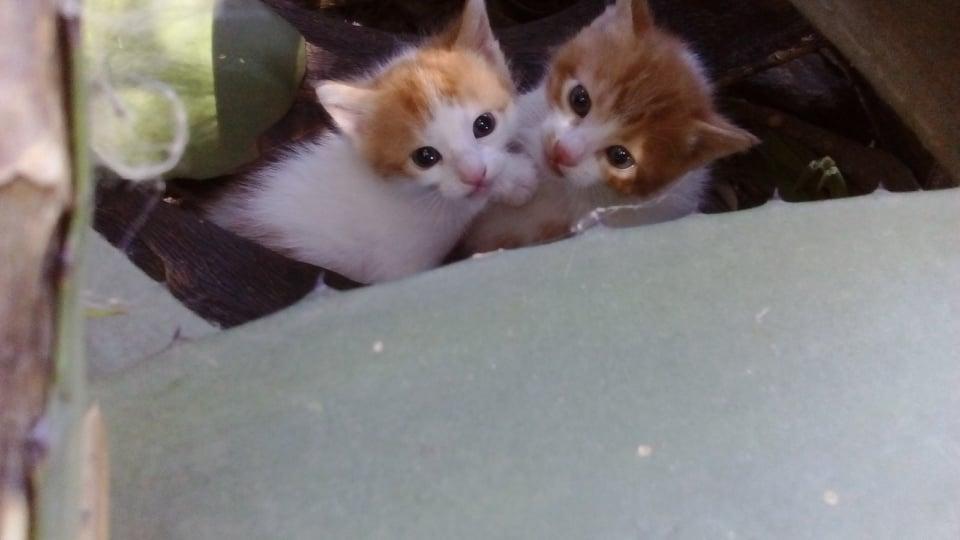 Spende für die Straßenkatzen in Istron/Kreta