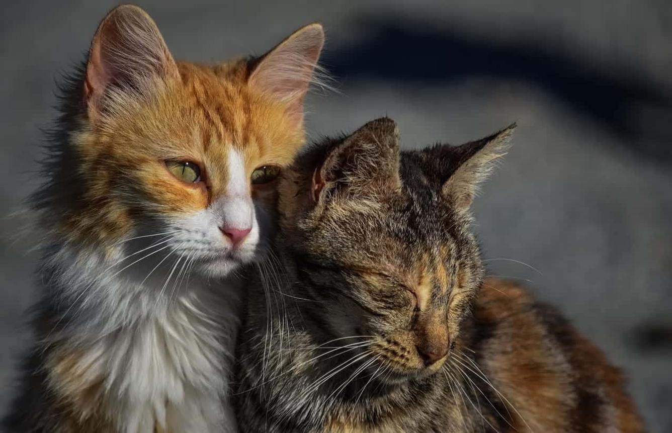 Asociación El Gato Garduño