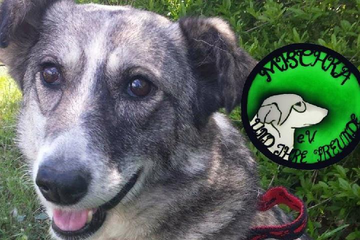 Hilfe für Mischka und ihre Freunde e.V.Tierschutzhof