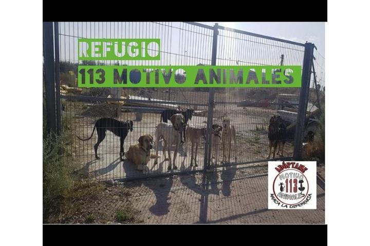 113 MOTIVO ANIMALES