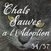CHATS SAUVES A L'ADOPTION 54/57