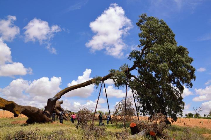 Bosques Sin Fronteras (www.bosquessinfronteras.com)