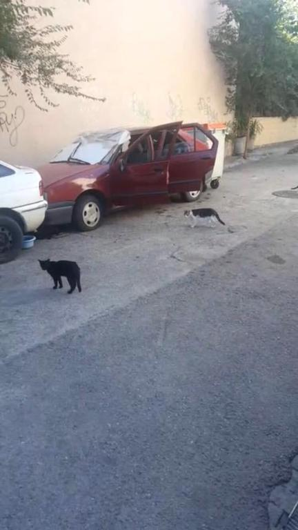 Los gatos batan y Aluche