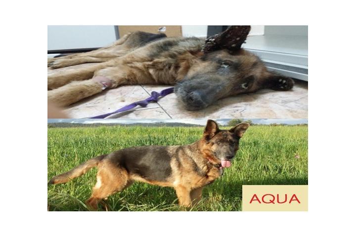 A R P A (Asociación Rondeña Protectora Animal)