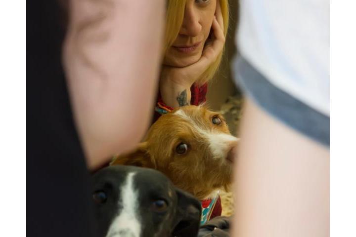 Esterilizando a todo posible perrete en adopcion