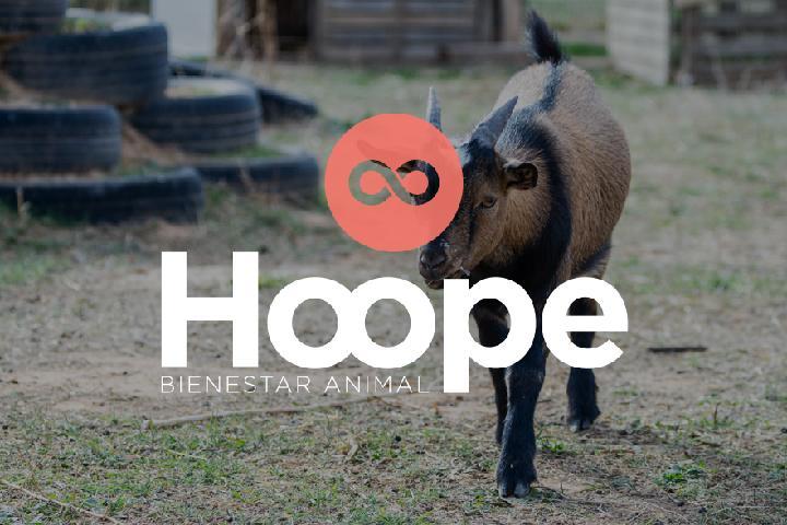 HOOPE Bienestar Animal