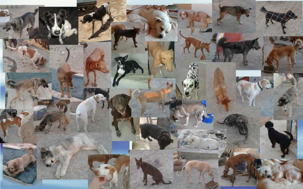 Clare's Chaotic Canines :D