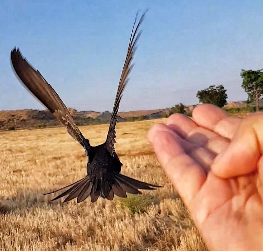 Guardería de aves ARDEIDAS
