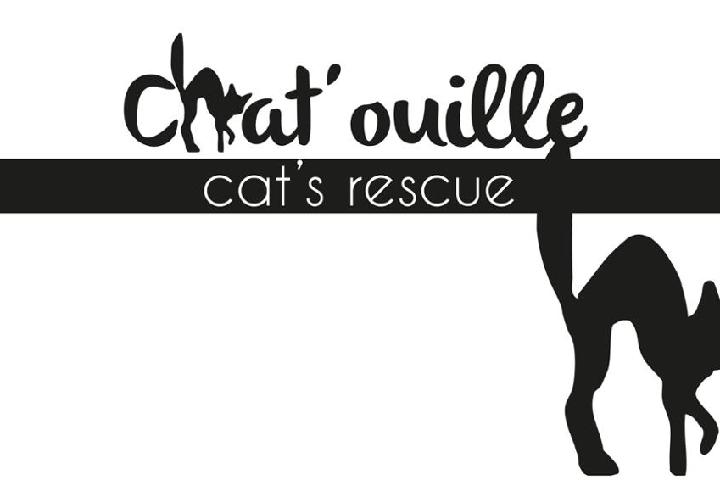 Chat'ouille cat's rescue