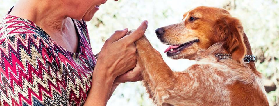 Spandy(Sociedad Protectora Animales de Yecla)