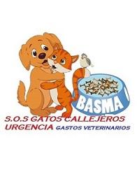 GATOS CALLEJEROS CASTRACIONESBASMA