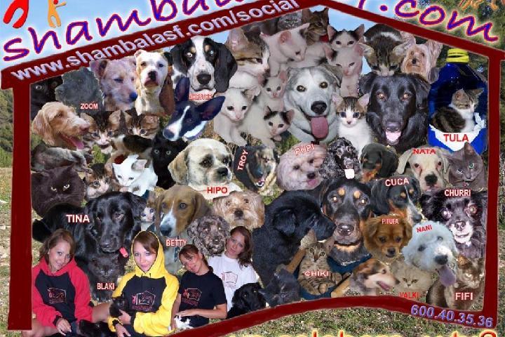 SHAMBALA ASS. PROTECTORA DE LOS ANIMALES