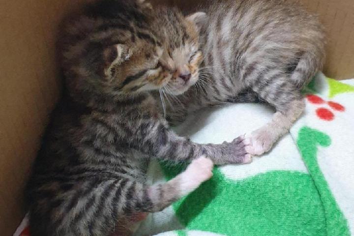Aiutiamo i gattini più sfortunati