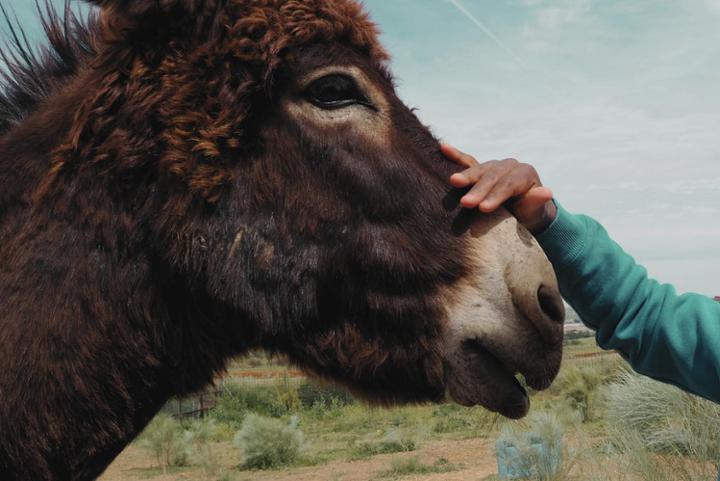 Souling · Proyectos de Ayuda Bidireccional entre Animales y Personas