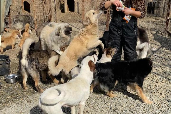 SOS ARMS Saving Orphaned Souls Sheila's Animal Rescue Mission Romania