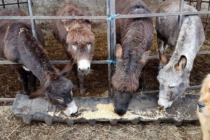 Unterstützung für die Esel- und Pferdehilfe in Rumänien e.V.