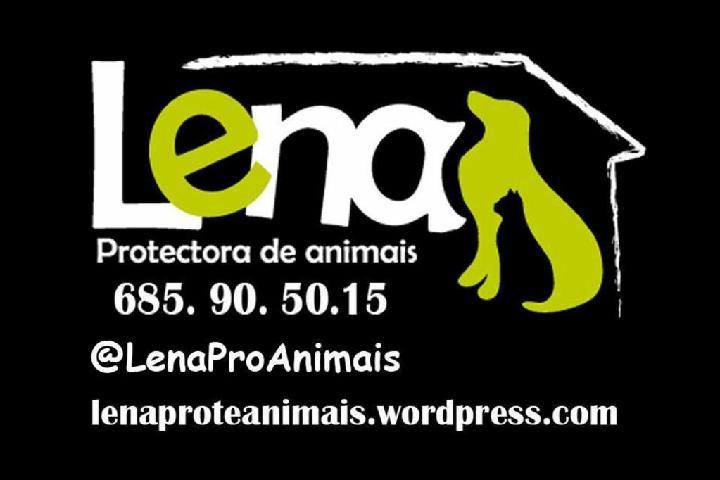 Lena Protectora de animais