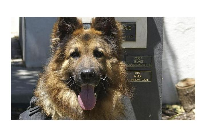 ONG RETIRED DOGS 112