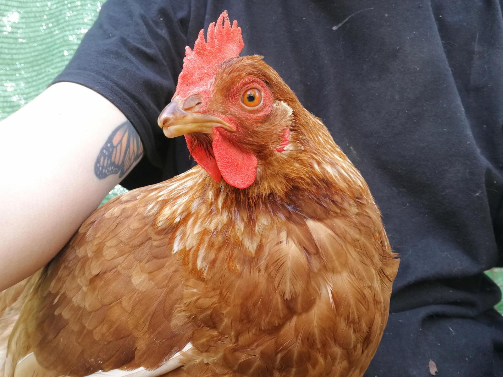 Manutención y nuevos rescates de animalitos (@suavidadradical)