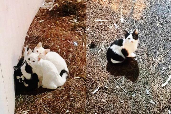 CES Cabo Huertas - gatos callejeros Alicante
