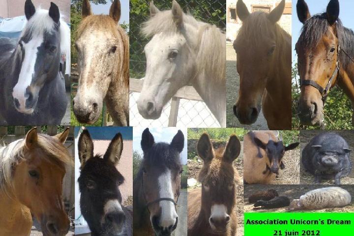 association Unicorn's Dream
