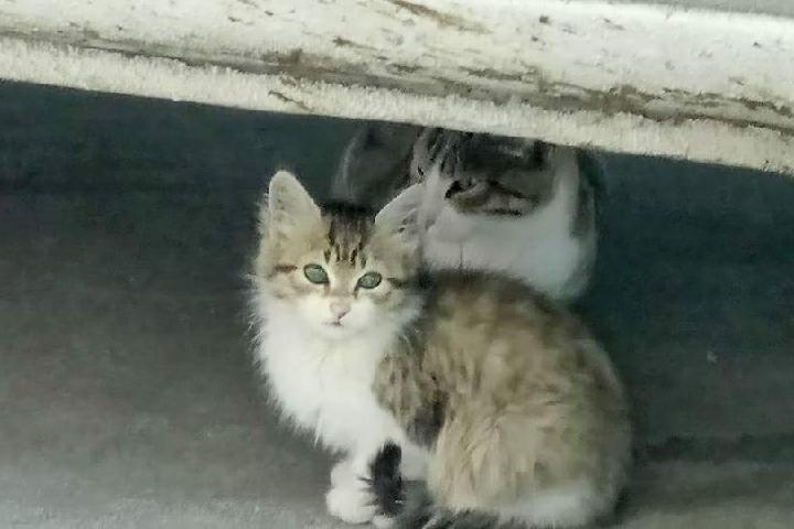 Gatos De Pueblu