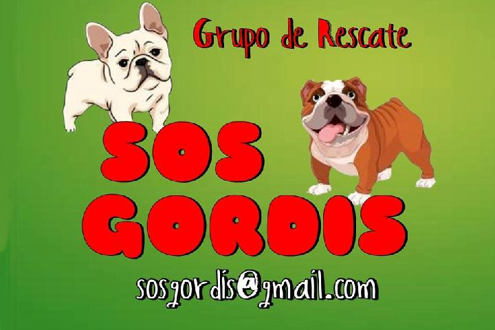 SOS GORDIS