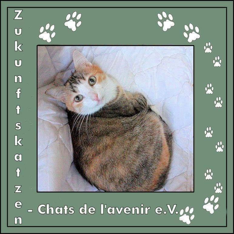 Zukunftskatzen - Chats de l'avenir e. V.
