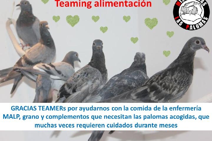 Mis Amigas Las Palomas (MALP)_Alimentación