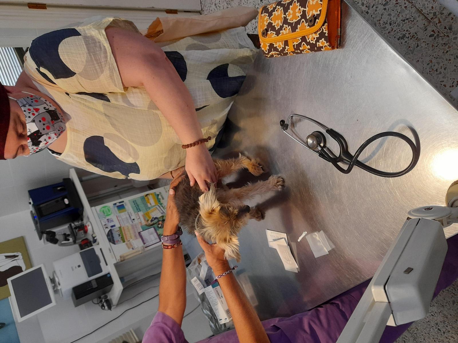 Ayúdanos a seguir rescatando el refugio de Raquel auxiliar Veterinaria
